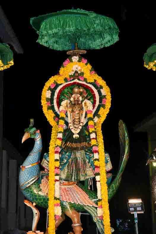 வண்ணை ஸ்ரீ வீரமாகாளி அம்மன் கோவில் 19ம் நாள் திருவிழா (4)